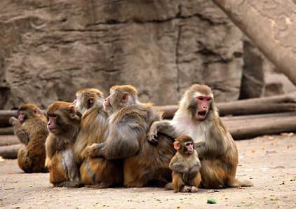 """郑州动物园猴子""""抱团取暖""""御严冬"""
