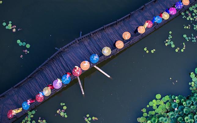 航拍:荷花池畔旗袍風