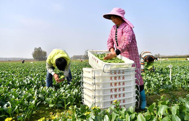 河南平頂山:現代生態循環農業助力鄉村振興