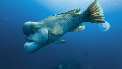 史上最醜卻有超能力的魚