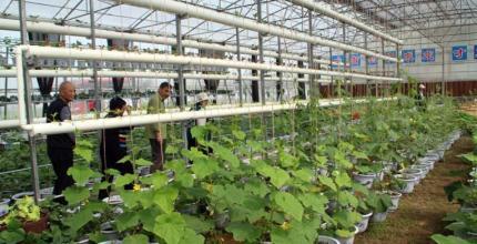 经济生态化、生态经济化——豫、鄂传统农区走上乡村绿色发展之路
