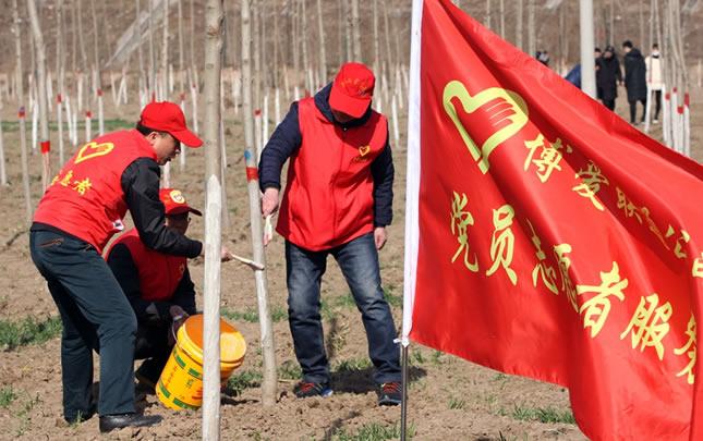 河南博爱:上班第一天万人植树忙