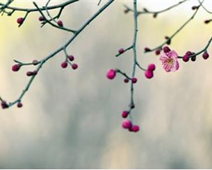 郑州周末气温今降明升 游园赏花看天再出门