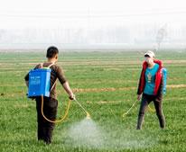 河南浚縣:噴灑農藥 麥田管理保豐收