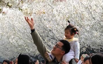 入春时节赏樱花