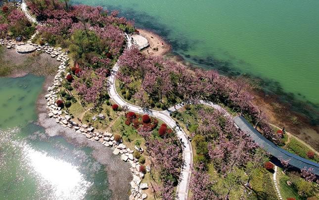 【航拍视频】商丘日月湖樱花岛