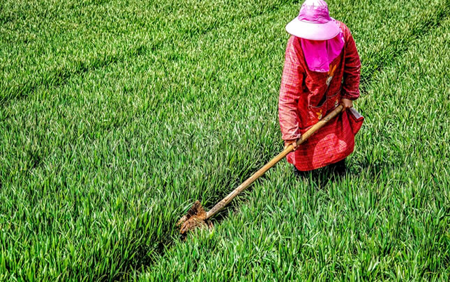 河南滑县:加强春季麦田管理保丰收