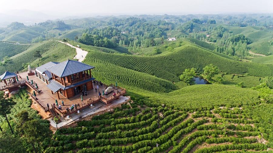 【航拍】信阳茶山美如画 茶旅一体促扶贫