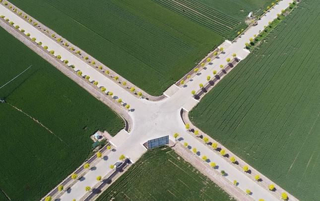 【航拍】许昌高标准粮田小麦丰收在望