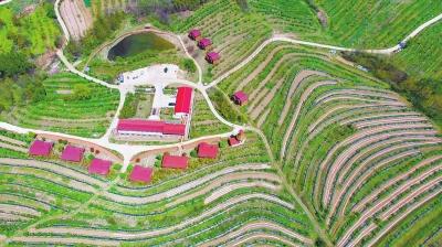 河南洛宁特色农业产业引领精准脱贫