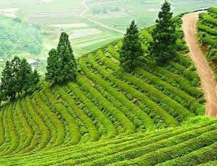 38年成林389万亩 河南飞播造林 富了乡亲美了生态