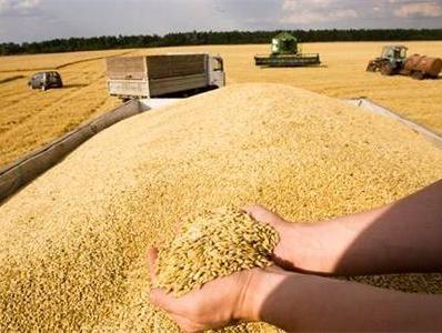 采取多项措施 河南财政全力支持夏粮收购