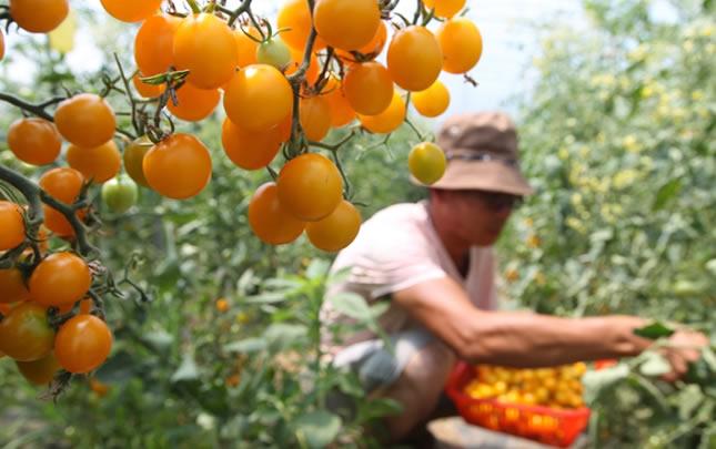 河南鄢陵:特色産業扶貧促發展