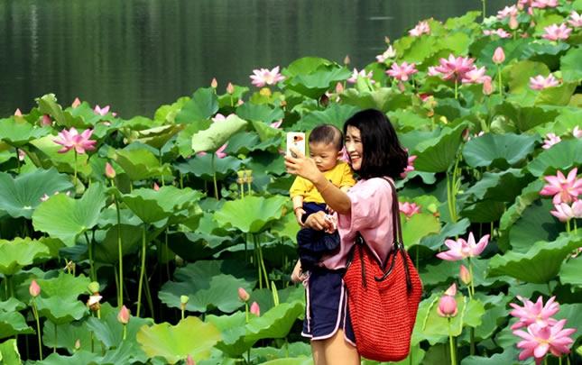 河南许昌:荷花香飘护城河