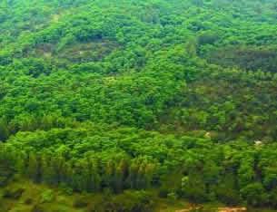 河南利用外资造林747万余亩