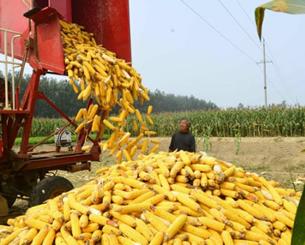 河南省大部地区夏玉米收获期提前