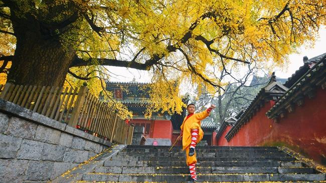 初冬的少林寺是一抹動人心魄的美