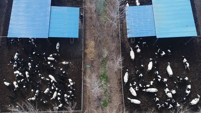 【航拍】河南武陟:現代化養殖業促農民增收