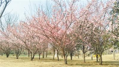 """春季""""問花""""就去綠博園吧"""