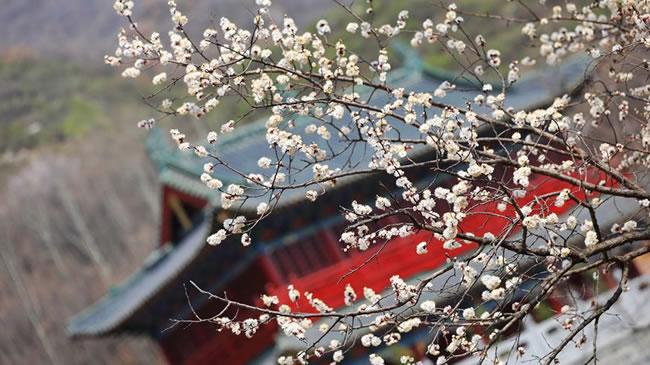 花開成海 樂享春天