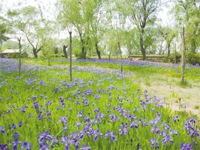 母親河畔春意濃 百花盛開報春來
