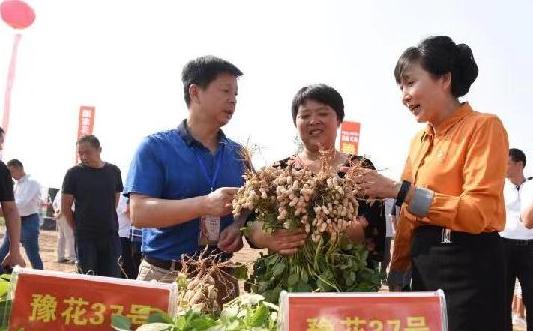 全國花生産業發展論壇在正陽縣舉行