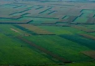 河南打造黃河灘區優質草業帶 種植紫花苜蓿等飼草