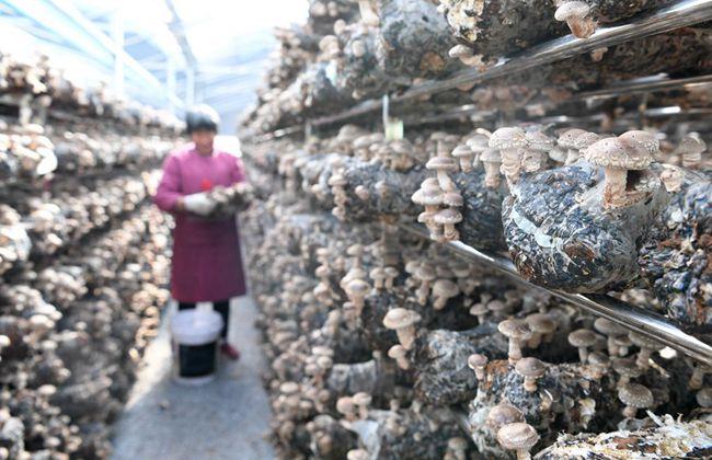 河南嵩县:利益联结培育产业 全域旅游富民强县