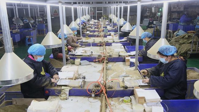 河南汝陽:加班加點生産艾産品