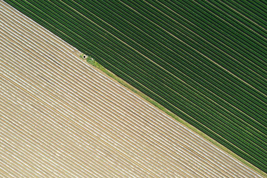 河南寶豐:鄉村大田 宛如地毯