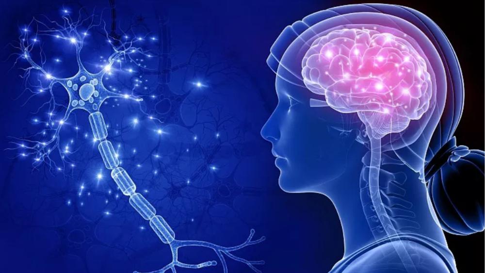 【健康解碼】顱腦損傷的診斷與處理