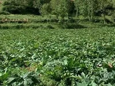 河南發現3種野生藥用植物新分布