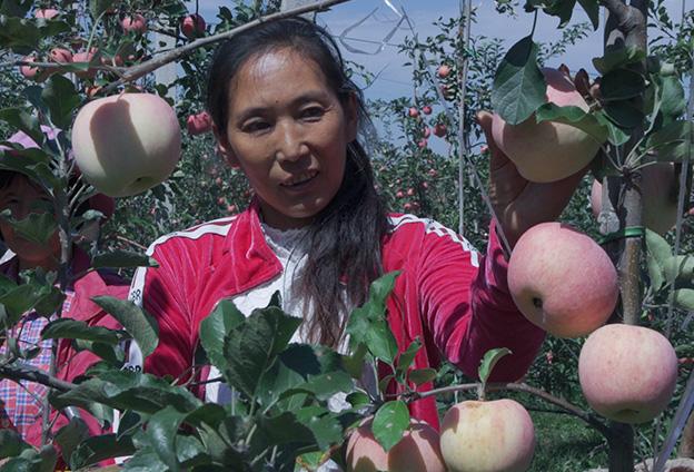我從小在寺河山上長大,從19歲開始幫果農賣蘋果,融入了太多個人感情,想的就是怎樣能幫果農把蘋果銷售出去。