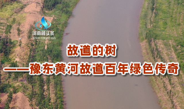 故道的樹——豫東黃河故道百年綠色傳奇