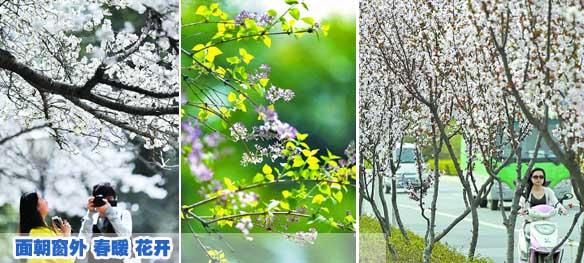 滑县森林公园湖规划图分享展示